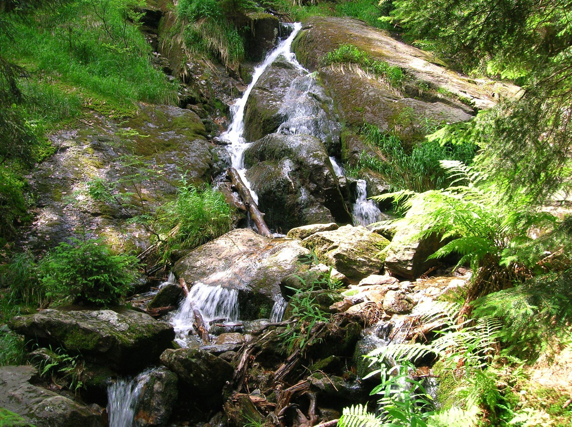 Bild mit Natur, Elemente, Wasser, Pflanzen, Landschaften, Bäume, Gewässer, Küsten und Ufer, Wälder, Flüsse, Wasserfälle, Schluchten, Wald, Bach, Waldbach, Wasserfall, Bach im Wald, Gewässer im Wald
