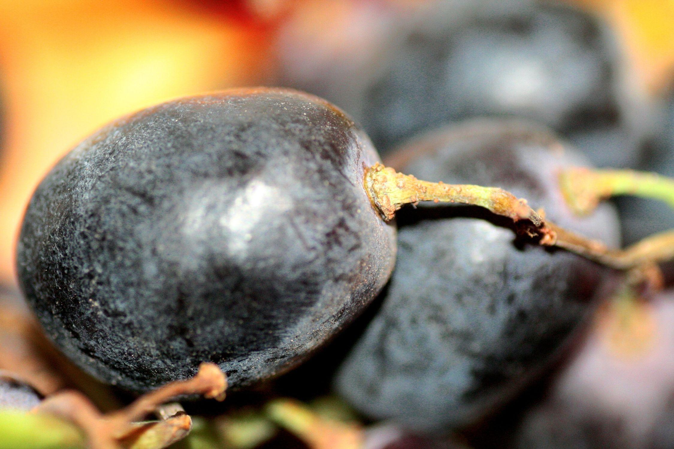 Bild mit Früchte, Lebensmittel, Essen, Trauben, Weinreben, Weintraube, Weintrauben, Traube, Weinbeere, Weinbeeren
