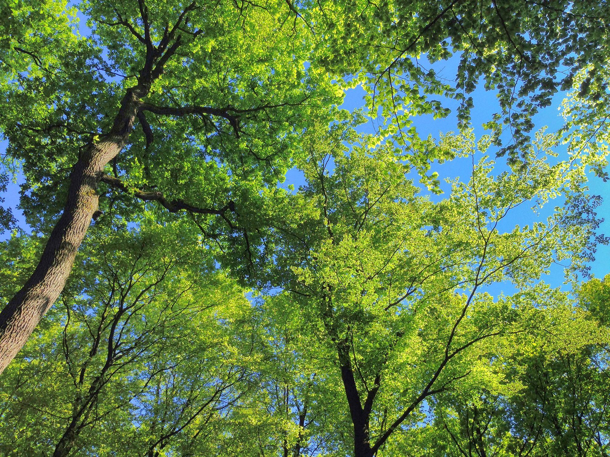 Bild mit Farben, Natur, Grün, Pflanzen, Landschaften, Himmel, Bäume, Jahreszeiten, Wälder, Frühling, Herbst, Tageslicht