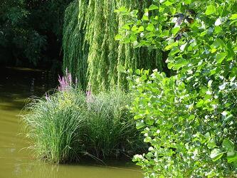 Bild mit Natur, Wasser, Gräser, Bäume, Gewässer, Laubbäume, Gras