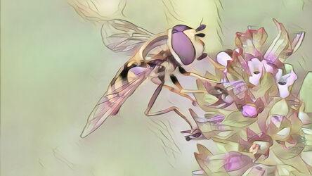 Bild mit Kunst, Natur, Pflanzen, Tier, Blume, Makro, garten, blüte, Insekt, Schwebfliege