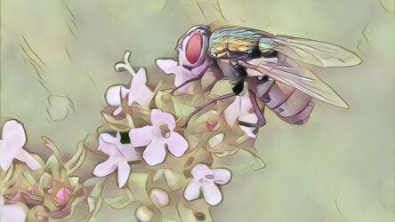 Bild mit Kunst, Natur, Pflanzen, Tier, Blume, Makro, garten, blüte, Insekt, Fliege