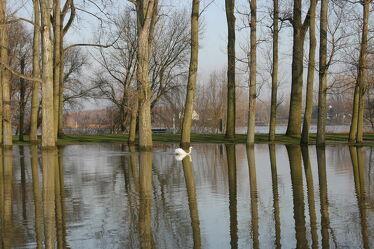 Bild mit Wasser, Bäume, Gewässer, Schwäne, Spiegelungen, schwan, Wasserlandschaften, Wasserlandschaft