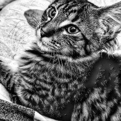Katze Haustier Ameline Kitten in love
