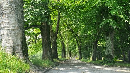 Bild mit Bäume, Wald, Weg, Waldweg