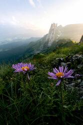 Bild mit Natur, Blumen, Sonnenuntergang, Alpen, Landschaft, Wiese, Blüten, Lichtstimmungen, Schweiz, Saxer Lücke