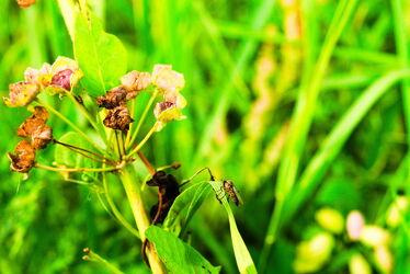 Bild mit Gräser, Gras, Wiese, Wiesengras, Fliege