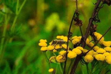 Bild mit Blumen, Bienen, Blumen und Blüten, Biene