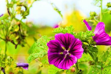 Bild mit Blumen, Blumen und Blüten