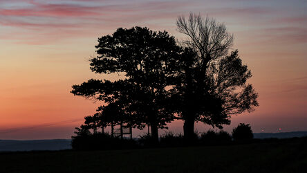 Bild mit Bäume, Sonnenaufgang