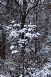 Gewächs im Schnee