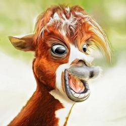 Bild mit Tiere, Augen, Haare, Kinderzimmer, Lama, Kinder, Tierportrait, spaß, wahnsinnig, fröhlich, lachen
