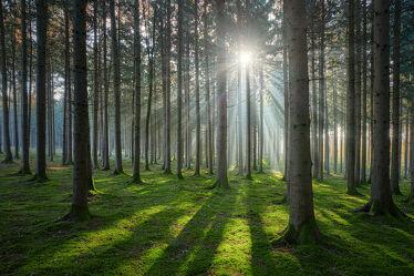 Bild mit Grün, Bäume, Nebel, Wald, Sonnenstrahlen, Moos
