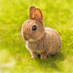 Bild mit Baby,Kinderzimmer,Hasen,Kaninchen,Tiere und Tierkinder,Ostern,Kunst fürs Kinderzimmer,niedlich,niedlich,Babyhase