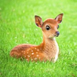 Bild mit Kinderzimmer,Tiere und Tierkinder,Kunst fürs Kinderzimmer,Kitzlein,Kitz,Rehkitz,Kleines Reh,Bambi