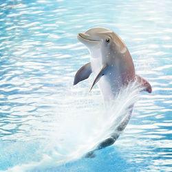 Bild mit Wasser,Blau,Kinderbilder,Kinderzimmer,Kunst fürs Kinderzimmer,Delfin,Delphin