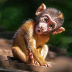 Bild mit Baby,Affe,Kinderbilder,Kinderzimmer,Kindermotive,niedlich,klein,süss,Überrascht,Äffchen