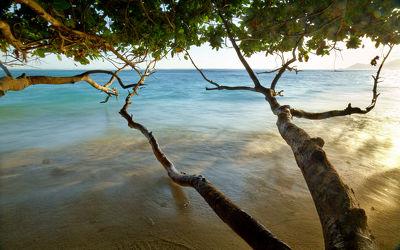 Bild mit Natur, Wasser, Bäume, Gewässer, Gewässer, Flüsse, Baum, Meer, Am Meer, Ast, Äste, Fluss