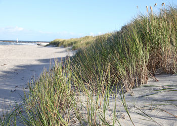Bild mit Wasser, Strände, Urlaub, Strand, Ostsee, Meer, Düne, Dünen, See, Retro, Ostseebilder, VINTAGE, Strandhafer, Ostseestrände, ddr