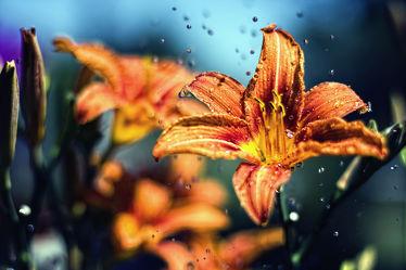 Blumen im Sommereggen