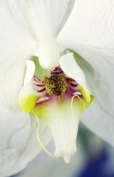 Bild mit Pflanzen, Blumen, Orchideen, Blume, Orchidee, Pflanze, Blüten, blüte