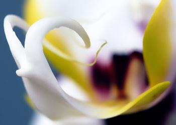 Bild mit Pflanzen, Blumen, Orchideen, Blume, Orchidee, Pflanze