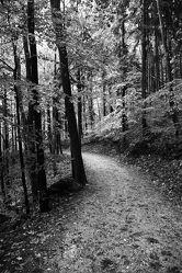 Wald Schwarz Weiß 3