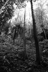 Bild mit Natur, Bäume, Laubbäume, Wald, Baum, Laubbaum, schwarz weiß, Laub, Naturfoto