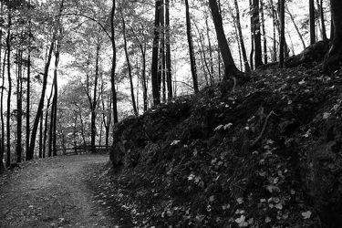 Wald Schwarz Weiß 5