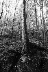 Wald Schwarz Weiß 8