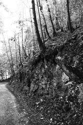 Wald Schwarz Weiß 9
