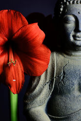 Bild mit Blumen, Rot, Blume, Meditation, Ruhe, Entspannung, Buddha, Wellness, Spa, Yoga, zen
