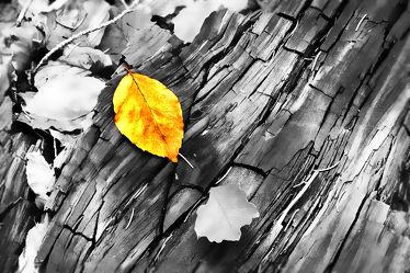 Bild mit Holz,Herbst,Holzstruktur,Blätter,Blatt