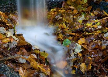 Saalequelle im Herbst