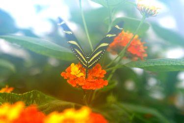 Bilder mit Tropical Butterflies