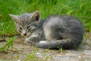 Süßes kleines Kätzchen