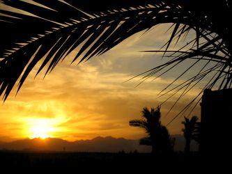 Palmwedel im Sonnenuntergang