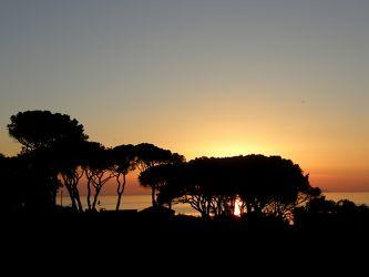 Sonnenuntergang hinter Pinienbäumen