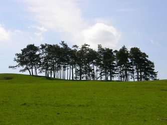 Baumgruppe auf dem Hörnle