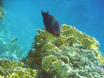 Fisch am Riff
