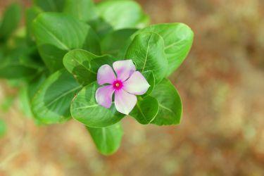 Zarte Blume