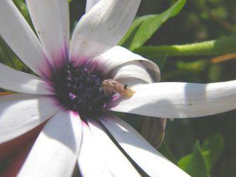 Besuch am Blütenkelch