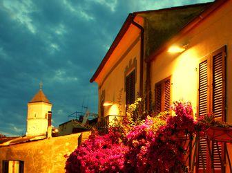 Blumenpracht in der Nacht