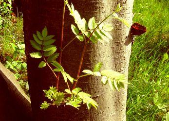 Junge Zweige