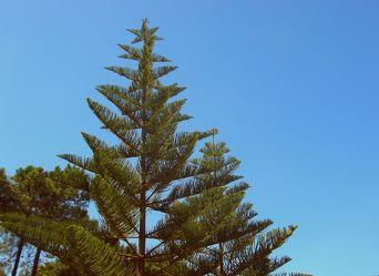 Exotische Bäume