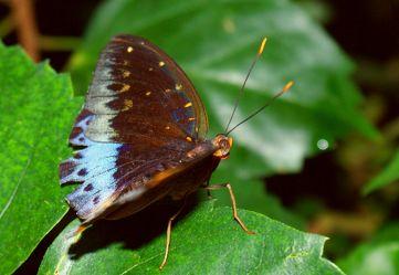 Makro Schmetterling