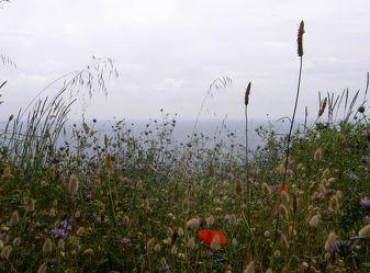 Sommerwiese am Meer
