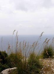 Gräser und Meer