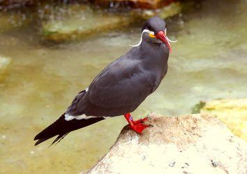 Hübscher Vogel