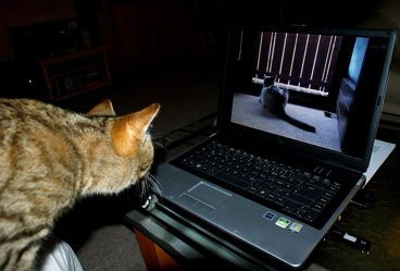 Katze am Computer